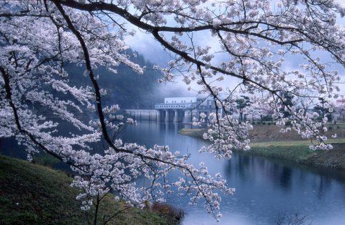 お花見2018年【関西】京都市外の穴場の桜の隠れ名所や夜桜スポット!