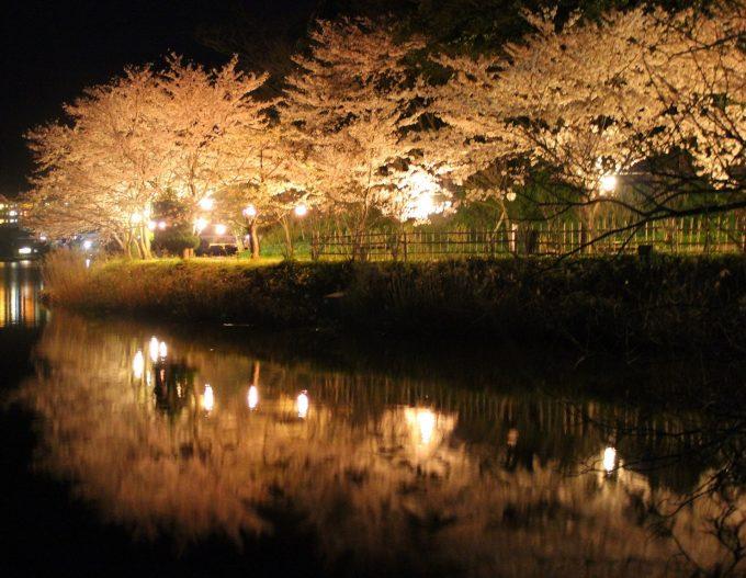 お花見 関西 京都 穴場 桜 名所 夜桜 スポット