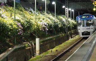 関東 あじさい おすすめ 名所 ランキング 見頃 時期 ライトアップ スポット