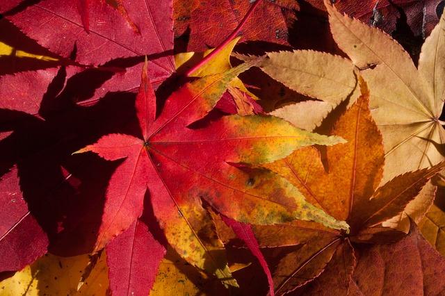挨拶文【11月】書き出し・結びの例文!上旬・中旬・下旬の季語と時候