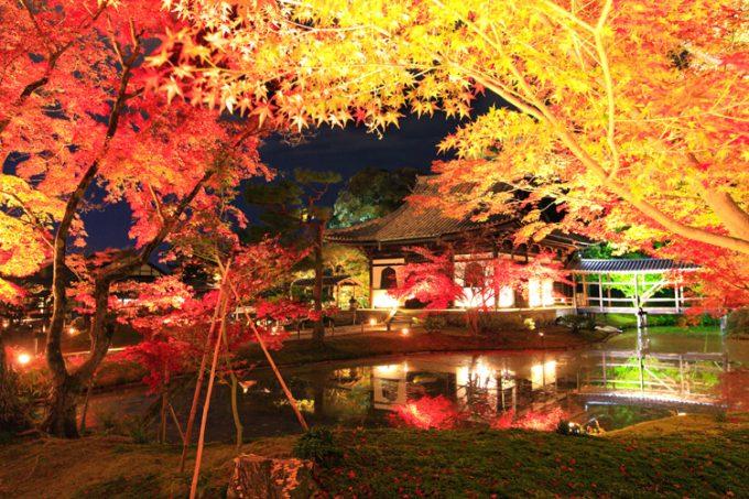 高台寺 圓徳院 紅葉 見頃 秋ライトアップ