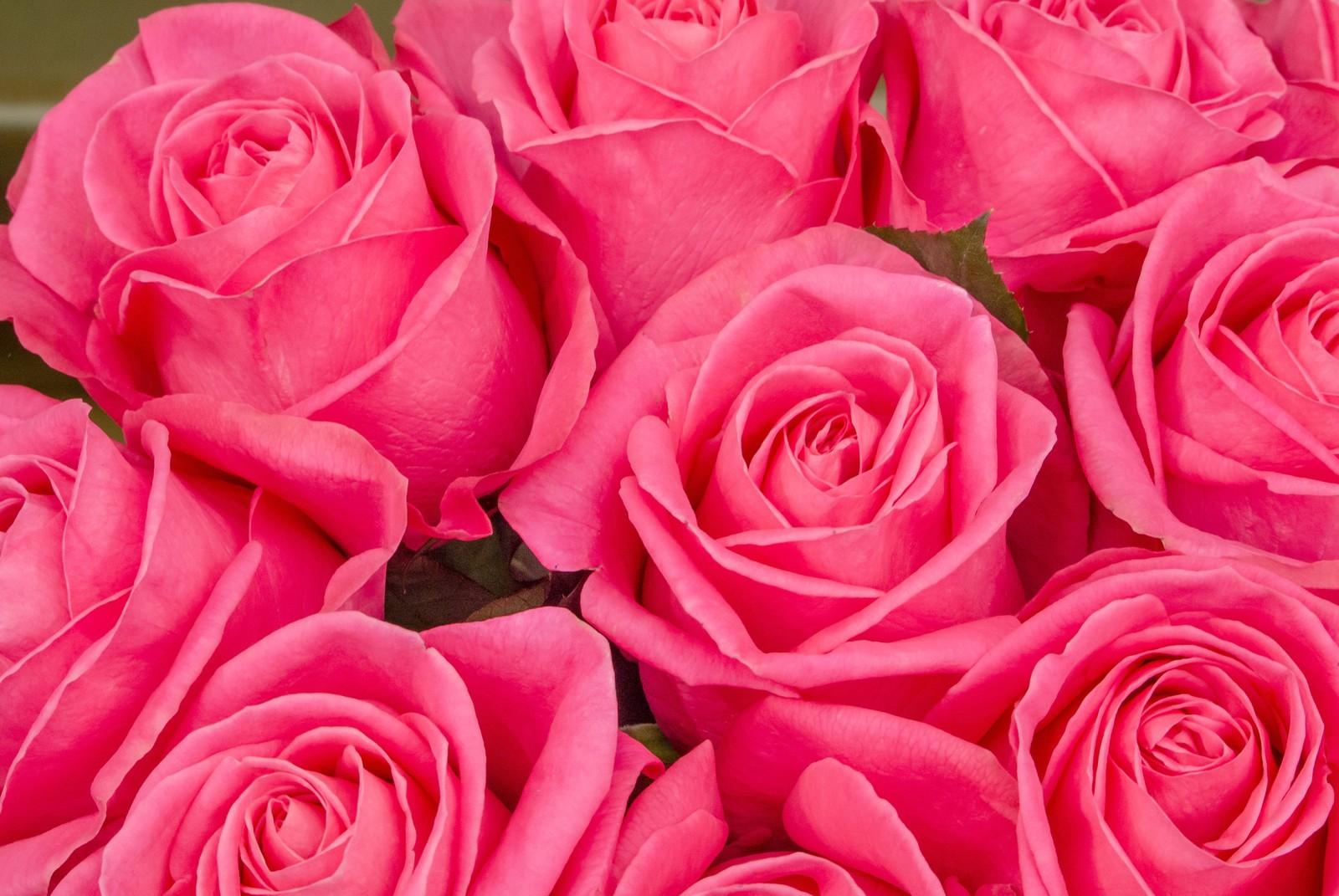 薔薇 の 花 言葉 本数