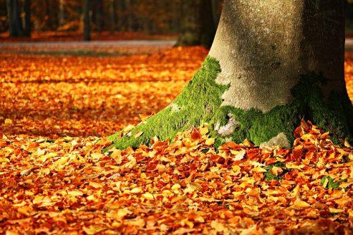 時候の挨拶 秋 9月 10月 11月 ビジネス 書き出し 例文
