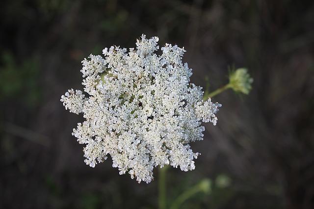 flower-1266763_640