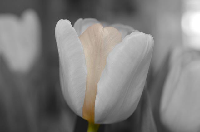 flower-144285_640