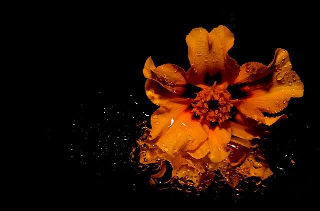 flower-144486_640