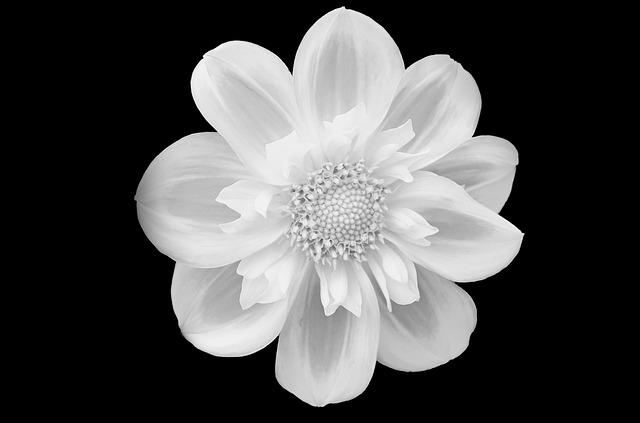 flower-219963_640