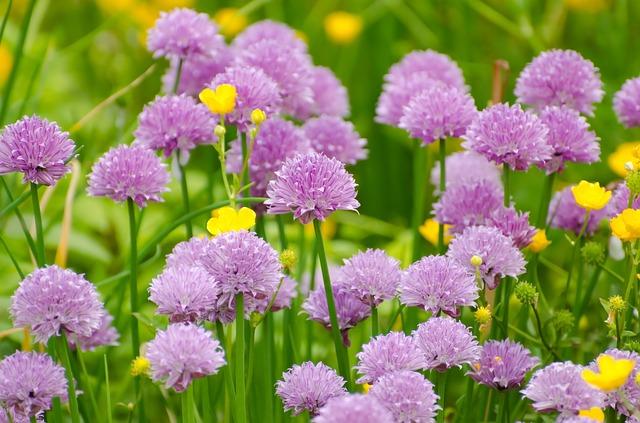 flower-276012_640