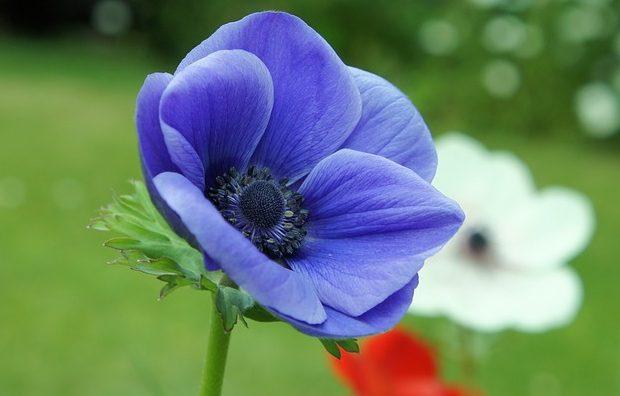 flower-278024_640