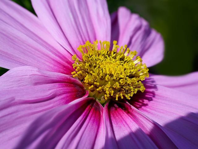 flower-377288_640