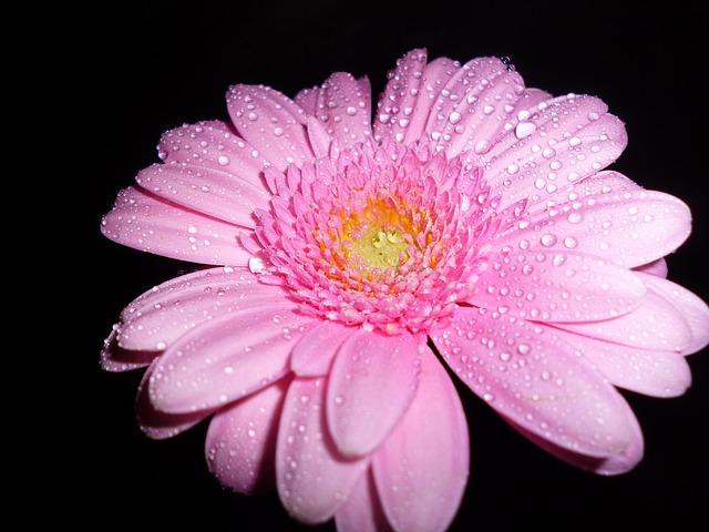 flower-63818_640