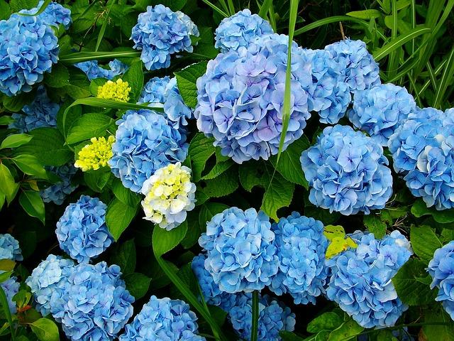 flowers-1045105_640