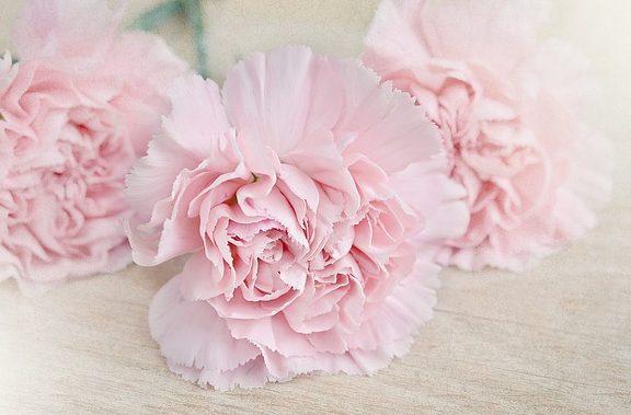 flowers-1363668_640
