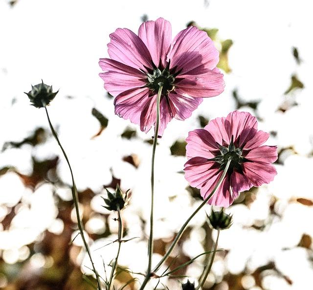 flowers-209144_640
