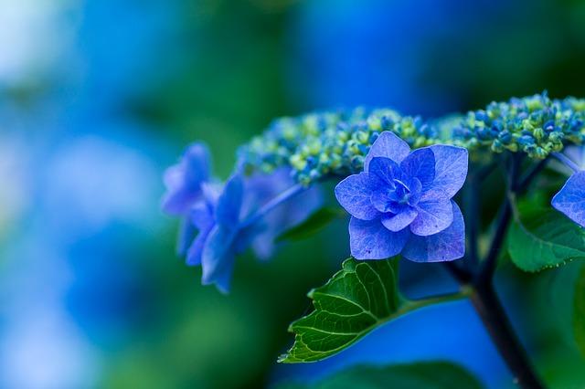 plant-1197746_640