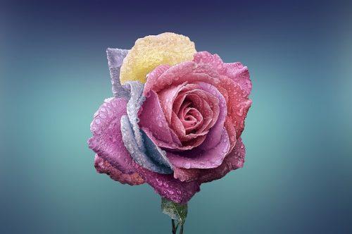 「高嶺の花」意味と由来!例文や類語と高嶺の花と言われる女性の特徴