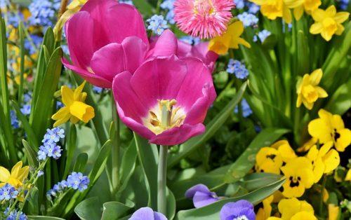 時候の挨拶 春 3月 4月 5月 ビジネス 書き出し 例文