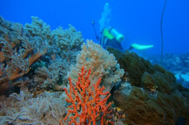 underwater-713820_640