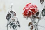 winter-550930_640
