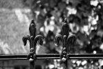 wrought-iron-1590275_640