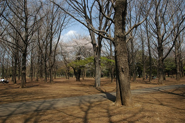 yoyogi-park-738688_640