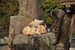 zoo-1065226_640